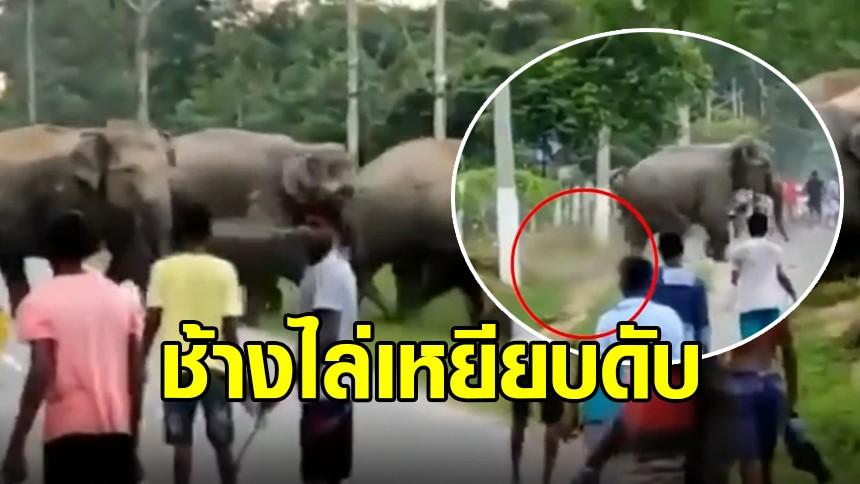 สุดสลด ชาวอินเดียแห่มุงดูช้างป่าข้ามถนน สุดท้ายเจอไล่กระทืบ เสียชีวิต