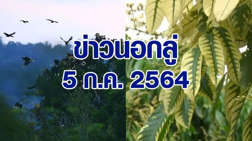 ข่าวนอกลู่ 5 ก.ค. 64 - ฝูงนกเงือก 'สงขลา' กว่า 300 ตัว พากันบินกลับรัง / ชาวสวนปลูกลำใย พบใบเป็นด่วงเกือบทั้งต้น