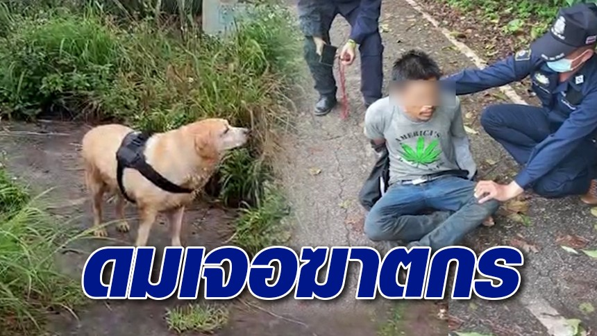 """ฮีโร่4ขา """"สุนัขตำรวจ"""" พาดมเจอมือฆ่าโบกปูนช่างรับเหมา ซ่อนตัวริมถนนเชียงราย"""