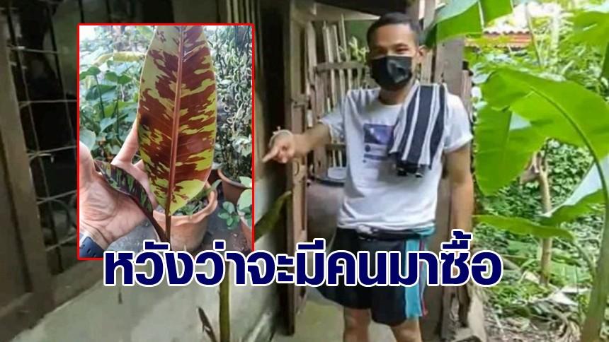 พ่อค้าขายหอยนางรม โพสต์ขายกล้วยด่าง 2 ต้น เผื่อพอจะได้ค่าปลาทู