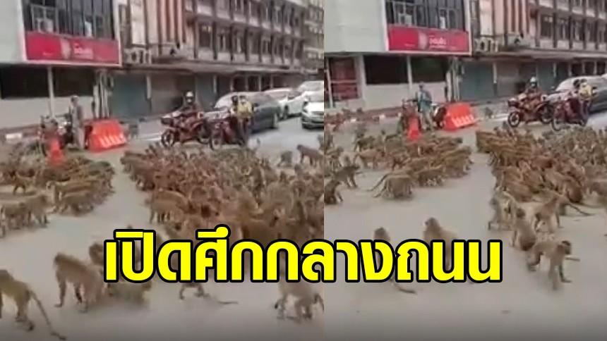 วันวุ่นๆ ของวัยรุ่นลพบุรี! 2 แก๊งลิงเปิดศึกตีกันกลางถนน มนุษย์ต้องเปิดเสียงหวอไล่ ถึงยอมแยกย้าย