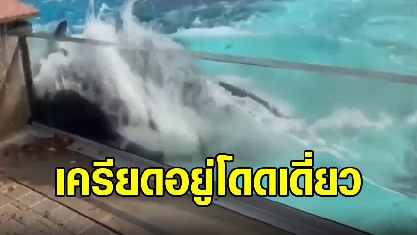 วาฬเพชฌฆาตเครียดจัด ใช้หัวพุ่งชนสระ หลังอยู่อย่างโดดเดี่ยว ไม่เหลือคู่ชีวิตและลูกๆ