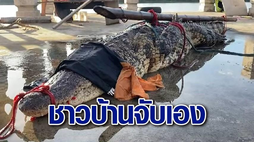 ชาวบ้านบางปะกง สวมบท 'ไกรทอง' จับ 'ไอ้เข้' ยาว 3 เมตร กลางแม่น้ำก่อนส่งให้ จนท.