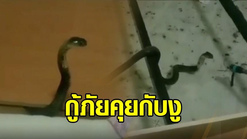 """ผวา งูเห่าเลื้อยซุกใต้เตียง กู้ภัยใจเย็นคุยกับงู """"สวัสดีครับพี่ ชื่ออะไรครับ"""" ก่อนบุกจับ"""