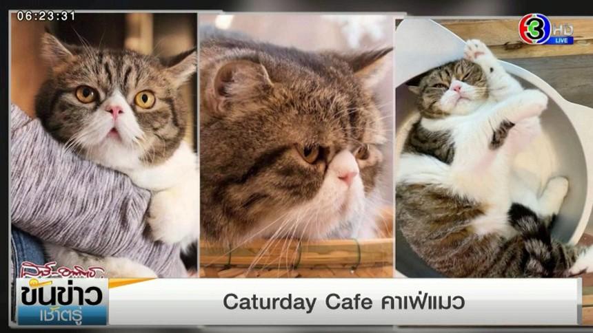 โบตั๋นเช็คอิน 'Caturday Cafe' คาเฟ่แมว คลายเหงาให้คนในยุครักษาระยะห่าง