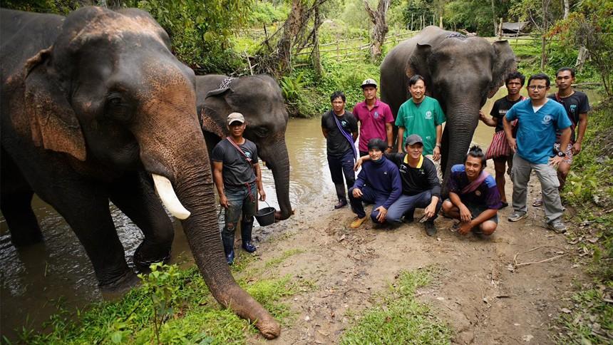 สัตวแพทย์ มช. ขึ้นอันดับ 6 ของโลก ด้านผลงานตีพิมพ์ และความเชี่ยวชาญการแพทย์เกี่ยวกับช้าง