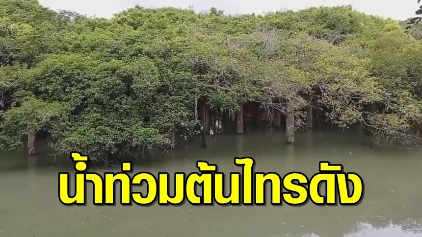 ลำน้ำมูลเอ่อท่วมอุทยานไทรงาม แหล่งท่องเที่ยวชื่อดัง ต้นไทรอายุกว่า 350 ปี ถูกน้ำท่วมสูง 1 เมตร