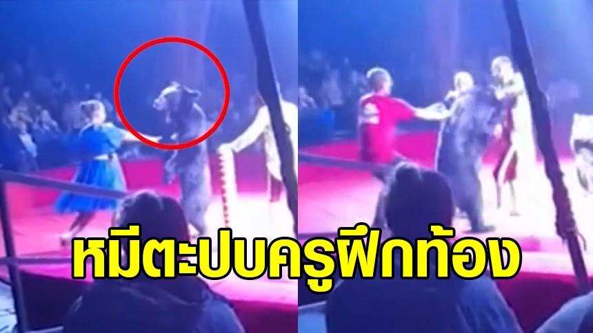 ระทึก ครูฝึกสาวตั้งท้อง ถูกหมีตะปบ ระหว่างแสดงละครสัตว์รัสเซีย