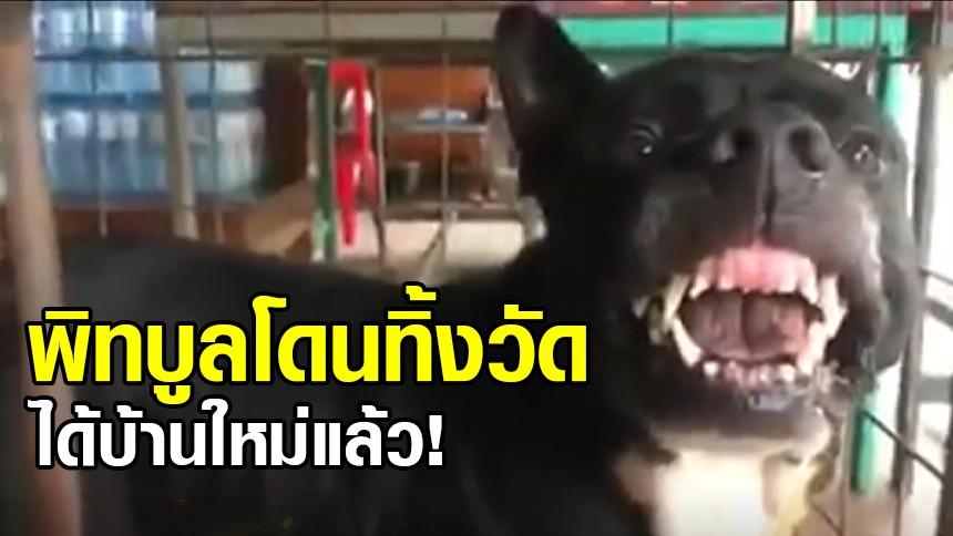 ได้บ้านใหม่แล้ว! น้องยิ้มสวย หมาพิทบูลโดนทิ้งวัด มีผู้ใจบุญรับไปดูแลแล้ว