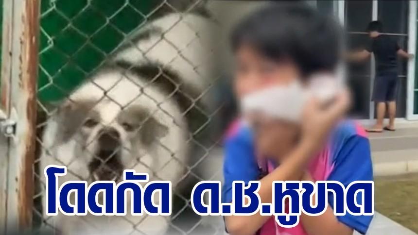 ร้องไห้จ้า! ด.ช. 10 ขวบ ถูกสุนัขพันธุ์บางแก้ว ขย้ำหูขาด ทั้งที่เลี้ยงมาตั้งแต่เด็ก