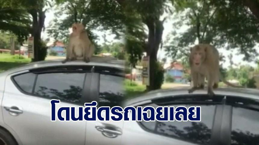 หนุ่มไปไหว้พระกับแฟน เจอเจ้าถิ่น 'ลิง' โดดยึดรถ แถมฉี่ใส่หลังคารถ