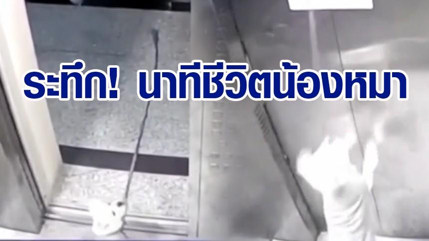 หวิดตายสยอง สุนัขแอบเดินเข้าลิฟต์เอง ประตูหนีบสายจูง รั้งคอห้อยกลางอากาศ