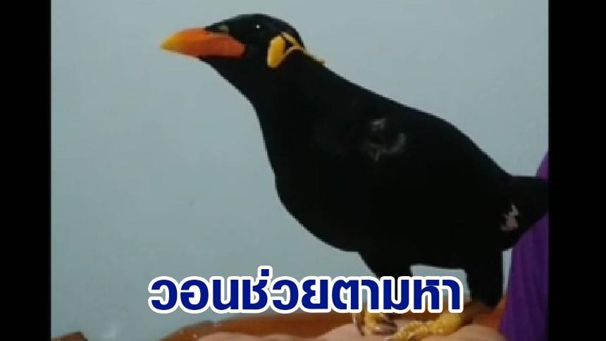 """วอนช่วยตามหา """"เจ้าเฉาก๊วย"""" นกขุนทอง พูดเก่ง บินหายออกจากกรง"""