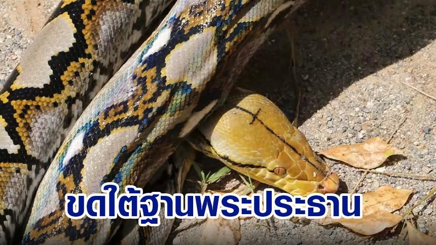 งูเหลือมขดใต้ฐานพระประธาน มีรูปไม้กางเขนที่หัว ชาวบ้านเชื่อเป็นงูศักดิ์สิทธิ์